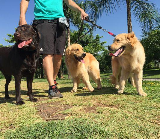 cuidadores de cachorro