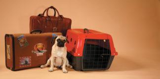 como transportar os pets nas viagens