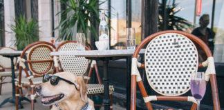 Lugares pet-friendly em Campinas