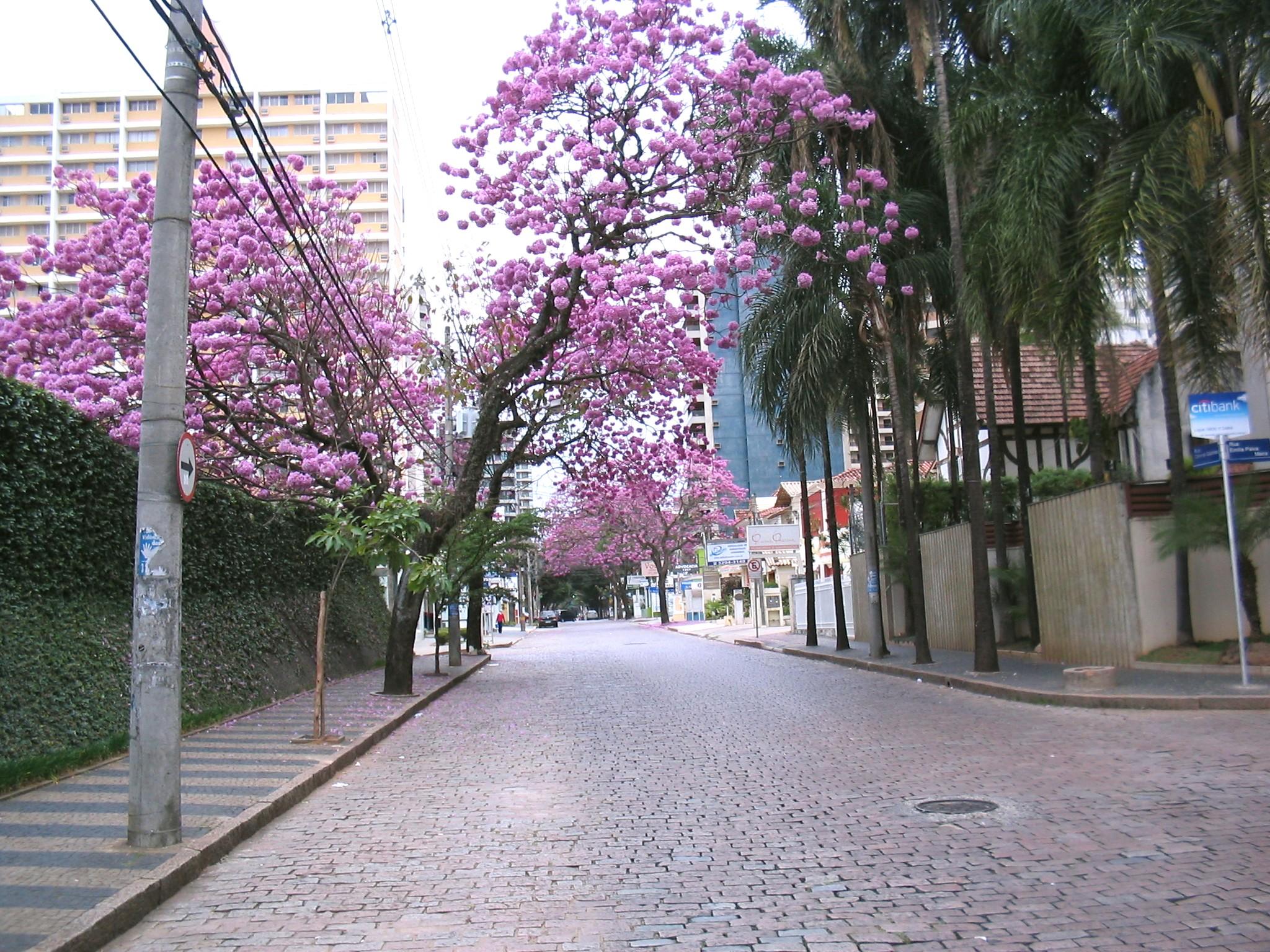 bairros preferidos de Campinas