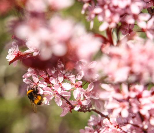 Bariloche primavera