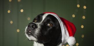 Pets e a decoração de Natal