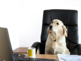 Pet no trabalho