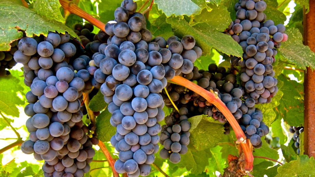 Festa da uva de jundiai
