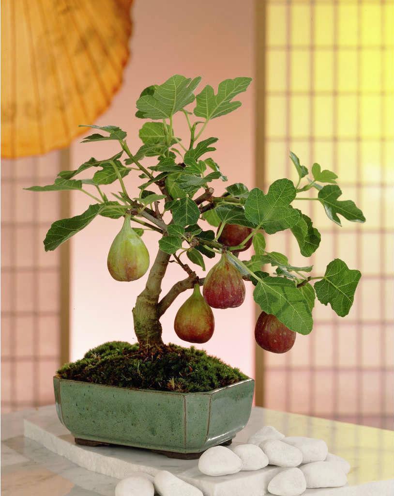 Fruta no vaso