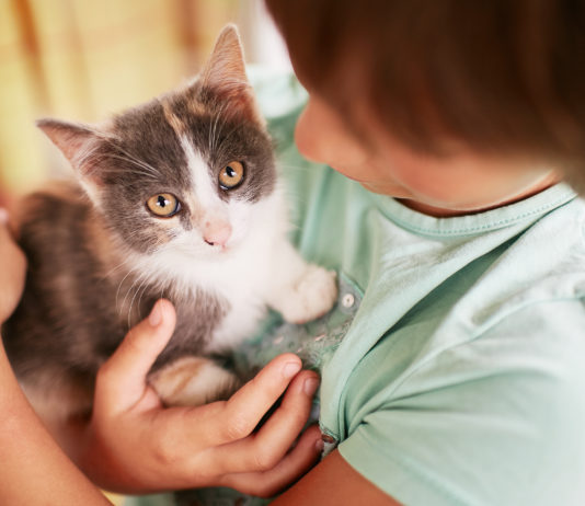 curiosidades sobre o pet